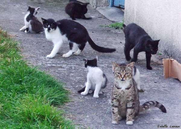 Tirer sur les chats sauvages, bientôt légal en Utah?