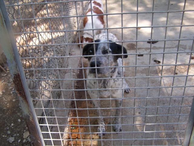 Refuge salon de provence bis 200 chiens sos frimousse for Sos dentiste salon de provence