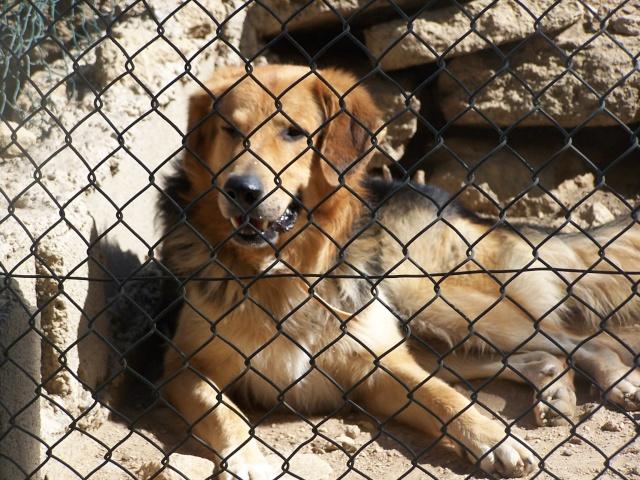 refuge salon de provence bis 200 chiens sos