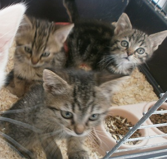 3 bébés