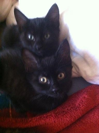 Bonnie et Clyde, chats noirs