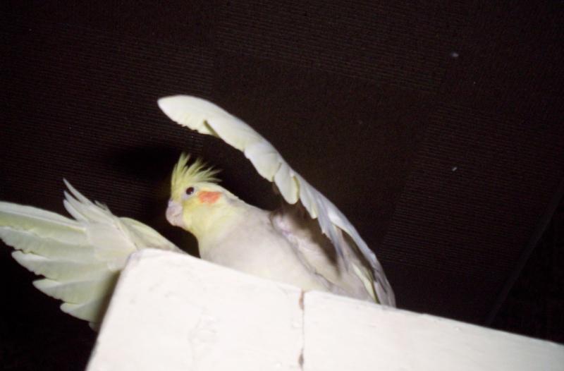 2008_010.jpg