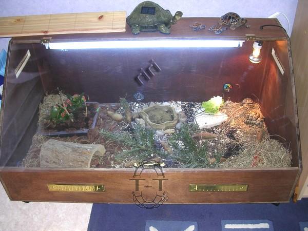 amenager un terrarium pour tortue