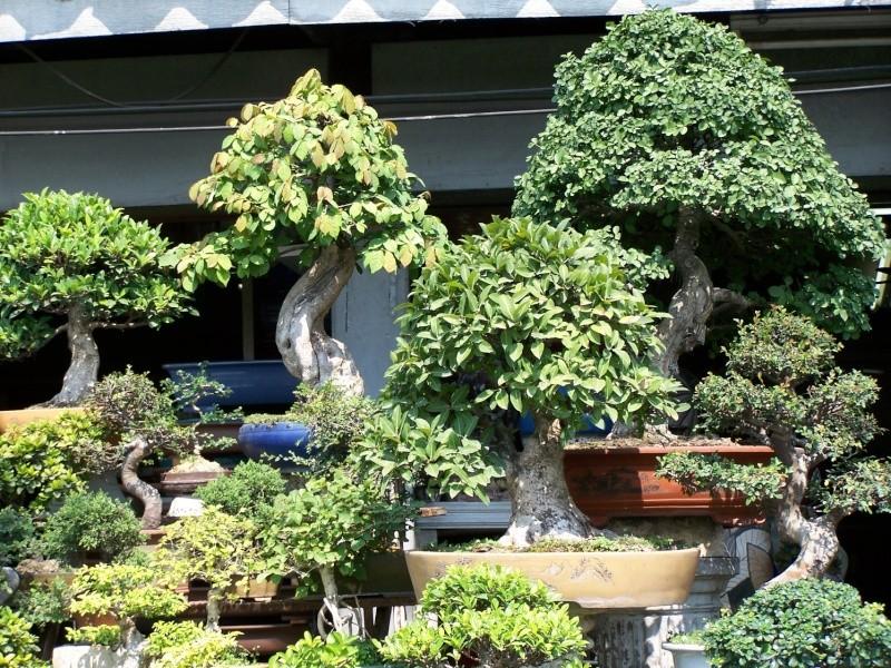 bonsais et plantes aquatiques au march de chatuchak bangkok. Black Bedroom Furniture Sets. Home Design Ideas