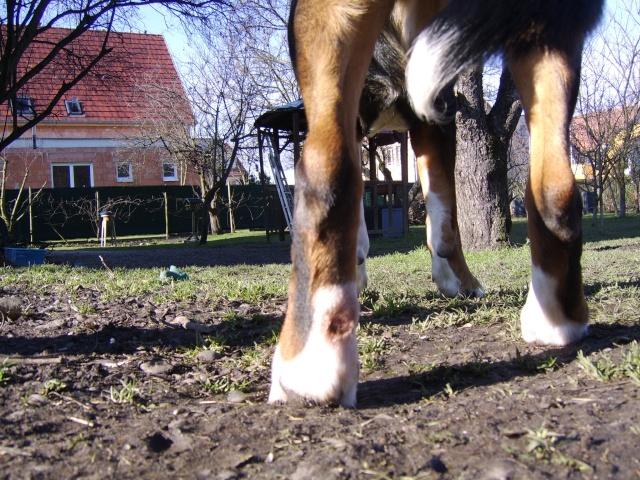 Santé chien : PLAIE DE LECHAGE