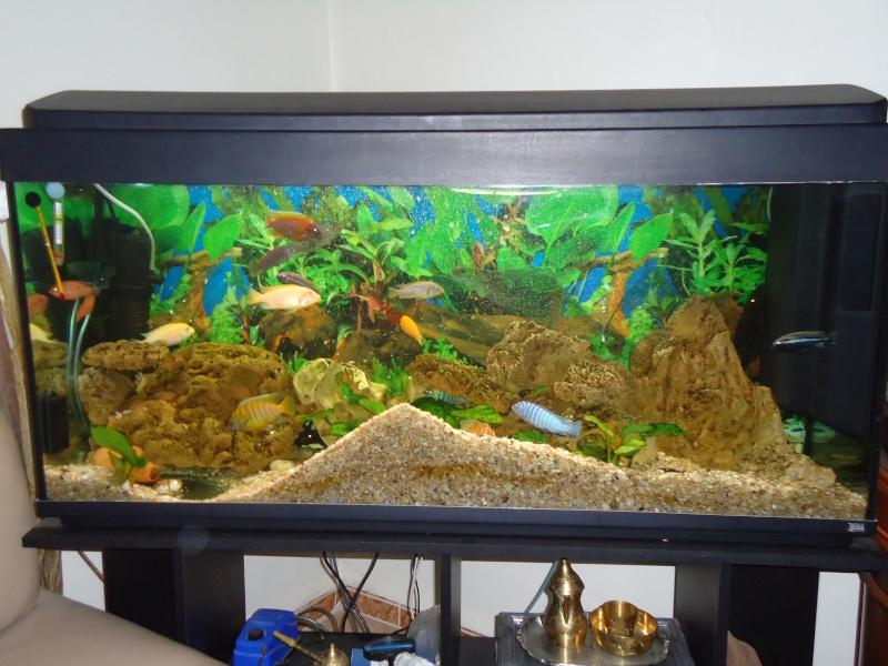 Mon aquarium rena 220 l for Aquarium rena