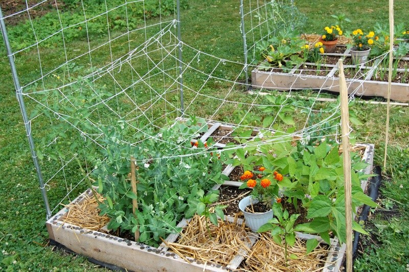My first sfg garden in 5a zone - Vegetable garden zone 5a ...