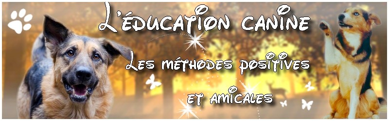 Forum de l'éducation canine positive & amicale