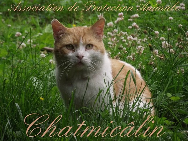 Chatmicâlin