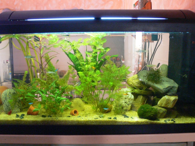 décoration aquarium 100l
