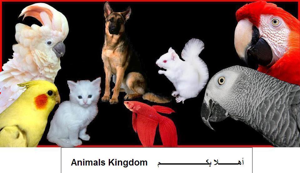 Animals Kingdom