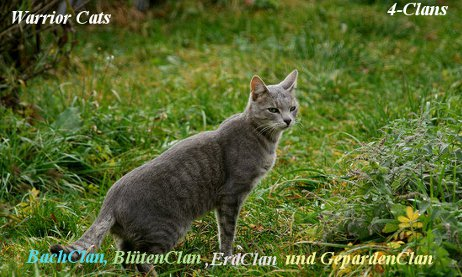 clannamen warrior cats